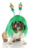St patricks day dog — Stock Photo
