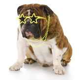 Famous dog — Stock Photo