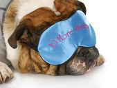 Sleepy dog — Stock Photo