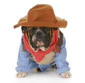 Dog dressed up like a cowboy — Stock Photo