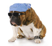 Cool dog — Stock Photo
