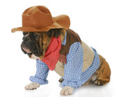 Dog dressed up like a cowboy — Stockfoto