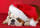Dog dressed up like santa — Stockfoto