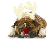 Dog dressed up like rudolph — Stock fotografie