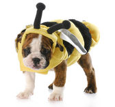 Puppy dressed up as a bee — Stockfoto