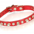 Dog collar — Stock Photo #14085569
