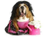 Dog complaining — Stock Photo