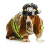 Dog firefighter — Stock Photo