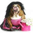 Spoiled dog — Stock Photo