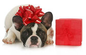 Christmas puppy — Stockfoto