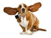 ペイント ブラシを保持している犬 — ストック写真