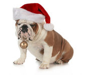 圣诞狗 — 图库照片