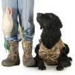 Stock Photo: Hunting dog