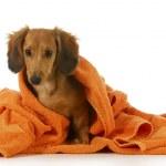 Постер, плакат: Dog bath