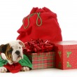 Christmas puppy — Stock Photo #15795439