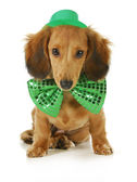 St. Patricks Day dog — Stock Photo