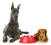 Dog dinner time — Stock Photo