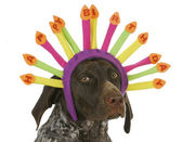 Happy birthday dog — Stock Photo