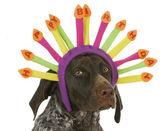 Happy birthday dog — Stock Photo