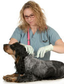 Veterinary care — Stock Photo