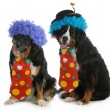 Funny dogs — Stock Photo #17848761