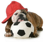 Sports hound — Stock Photo