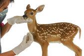 Wildlife veterinary care — Stock Photo