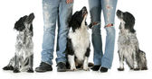 Family with dogs — Stock Photo