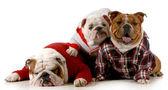 Dog family — Stock Photo