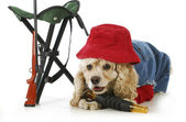 Lovecký pes — Stock fotografie