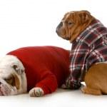 Dog couple — Stock Photo #19448847