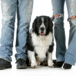 Family dog - Stock Photo