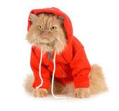 Katze tragen mantel — Stockfoto