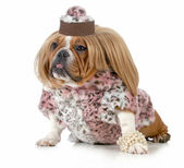 Female bulldog — Stock Photo