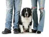 Family dog — Stock Photo