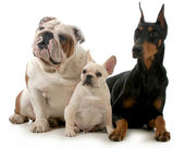 Three dogs — Foto de Stock