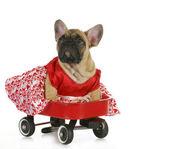 Cute dog in a wagon — Stock Photo