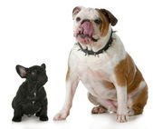 Big dog small dog — Stock Photo