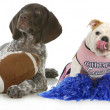 Stock Photo: Sports hounds
