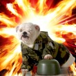 Military dog — Stock Photo #21763629