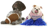 Sports hounds — Stock Photo