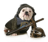 Dog dressed as knight — Stock Photo