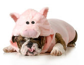 Dog dressed up like a pig — Стоковое фото