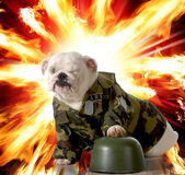 Military dog — Stock Photo