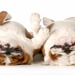 Two dogs sleeping — Stock Photo #24014421