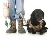 Caça de cão — Fotografia Stock