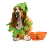 Halloween dog — Stock Photo