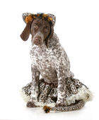 Dog dressed like a cat — Stock Photo