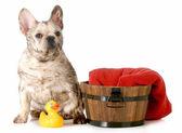 汚い犬 — ストック写真