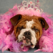 Spoiled dog - english bulldog dressed up with tiara  — Stock Photo